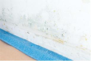 Feuchtigkeit Im Haus Gefährdet Unsere Gesundheit