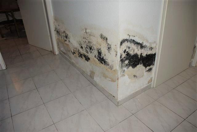 schimmel in der wohnung ab wann wird es eigentlich. Black Bedroom Furniture Sets. Home Design Ideas
