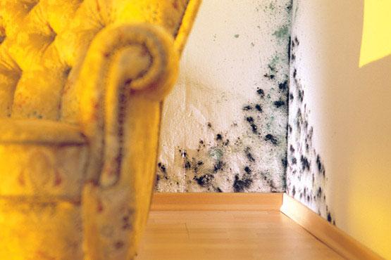 experten schimmelpilz ist nichts f r heimwerker abdichtungstechnik thomas walzer kenzingen. Black Bedroom Furniture Sets. Home Design Ideas