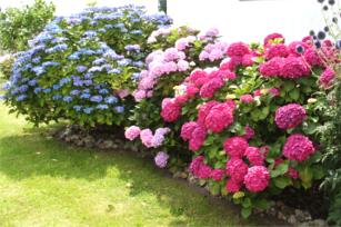 Meine 5 Praktischen Tipps Für Einen Schönen Garten Im August